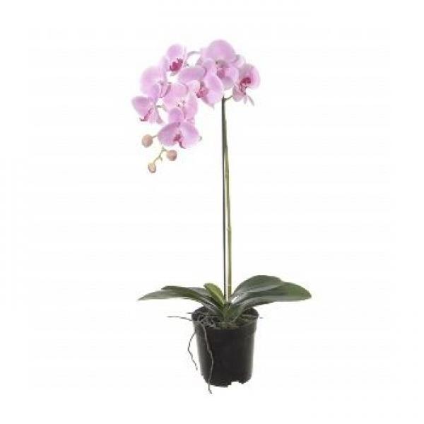 Pembe Tek Dal Orkide